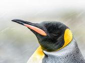 Weergave van de koning sluit pinguïn en haar hoofd met verschillende kleuren — Stockfoto
