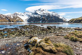 Beautiful view of South Atlantic Ocean.South Georgia, — Stock Photo