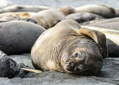 Cute seal lays on the coast — Stock Photo