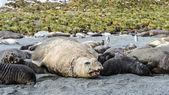Diverses espèces de phoque de l'atlantique — Photo