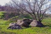 Wyspa hortitsia, zaporozhie, ukraina — Zdjęcie stockowe