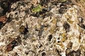 A textura da pedra — Foto Stock
