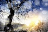 Winter sunset landscape — Stock Photo