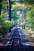 Ferrocarril a través del hermoso bosque otoñal — Foto de Stock