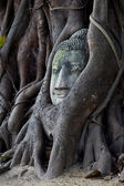 Head of Sandstone Buddha in The Tree Roots at Wat Mahathat, Ayutthaya, Thailand — Stock Photo