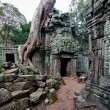 Stock Photo: Giant tree covering TProm temple, Siem Reap, Cambodia