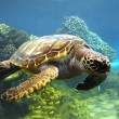 Swimming turtle — Stock Photo #14058708