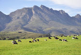 Western Cape. — Stock Photo