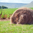 Haystack assembled on the field — Stock Photo