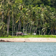 Stock Photo: Coconut trees near the beach