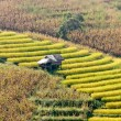 Terraced fields — Stock Photo #14582367