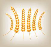 Vector golden wheat heads — Stock Vector