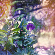 Distressed vintage grungy photo of plants and purple flower — Stock Photo