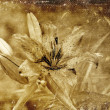 Distressed vintage grungy old photo of a tiger lily flower — Stock Photo