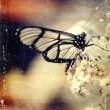 Stock Photo: Distressed vintage grungy photo butterfly on flower