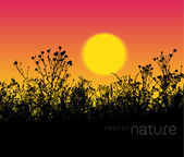 Vector nature background meadow grass silhouette at sunset — Stock Vector