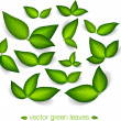 A set of vector green leaves — Stock vektor