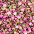 Stock Photo: Rosebuds