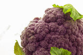 Purple cauliflower — Photo
