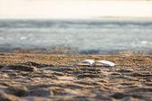 在海滩上的书 — 图库照片