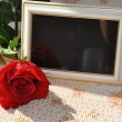 Photo frame  and the rose - Stock Photo