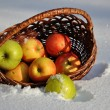 Stock Photo: For the song Apples on the snow singer Michael Muromova