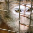 The monkey in the cage - Stock Photo