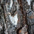 Details of bark of tree — 图库照片 #30815275