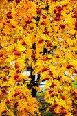 Multicolored paint autumn Rowan — Stockfoto