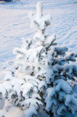 The little fir tree and soft fluffy snow — Zdjęcie stockowe
