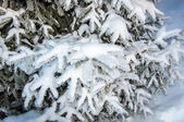 The little fir tree and soft fluffy snow — Foto de Stock