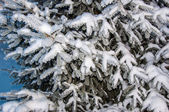 The little fir tree and soft fluffy snow — Photo