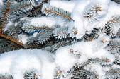 The little fir tree and soft fluffy snow — Stock Photo