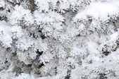 Spruce needles and soft fluffy snow — Stock fotografie