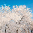 A tree in winter and soft fluffy snow — Stock Photo