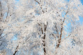 A tree in winter and soft fluffy snow — Stock fotografie