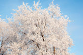 A tree in winter and soft fluffy snow — Photo