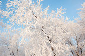 A tree in winter and soft fluffy snow — ストック写真