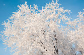A tree in winter and soft fluffy snow — Stockfoto