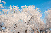 A tree in winter and soft fluffy snow — Foto de Stock
