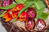 Tulipán a velikonoční vajíčko. — Stock fotografie