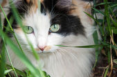 Cat out and about — Stock Photo