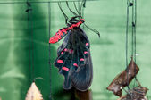 Transformation of the chrysalis to Butterfly sailboat — Stock Photo