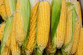 Corn is on sale at the Bazaar — Stock Photo