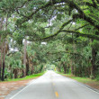 Live Oak Canopy — Stock Photo