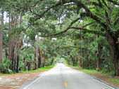 Live Oak Canopy — Stock Photo