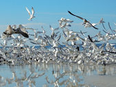 Birds in Flight — Stock Photo
