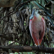 Roseate Spoonbill (Ajaia ajaja) sitting on tree limb — Stock Photo
