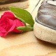 Shoe trample rose — Stock Photo