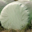 Plastic wrapped round hay bales - Stock Photo